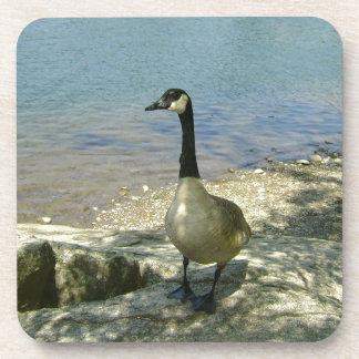 Goose on Rock Coasters