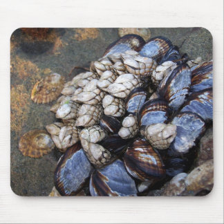 Goosenecks and Mussels Mouse Pad