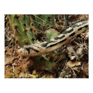 Gopher Snake Blank Postcard