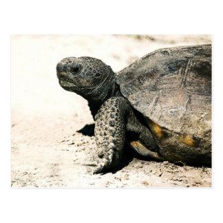Gopher Tortoise Art Postcard