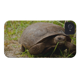 Gopher Tortoise Eats Lunch iPhone 4 Case