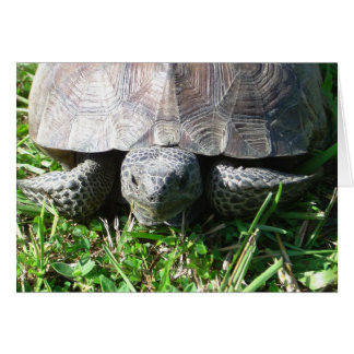 Gopher Tortoise in the Grass Card
