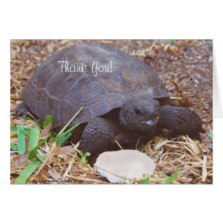 Gopher Turtle with Cuttlebone Mustache Card