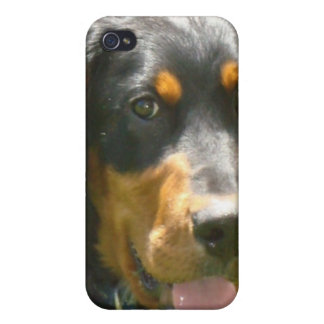 Gordon Setter Dog iPhone Case