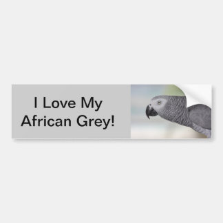 Gorgeous African Grey Parrot Bumper Sticker