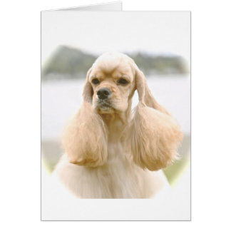 Gorgeous American Cocker Spaniel Card