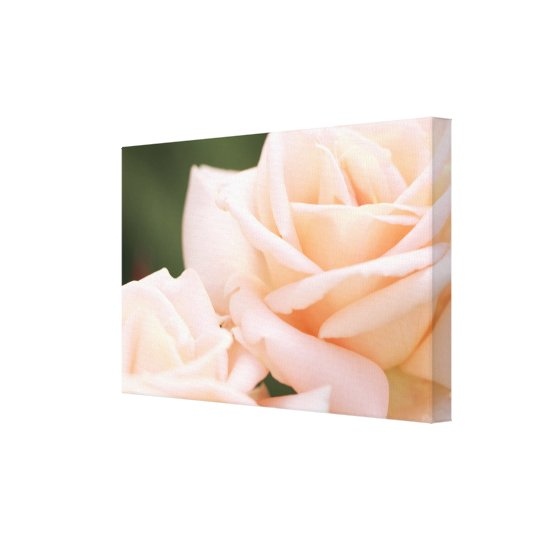 Gorgeous Beige Roses Stretched Canvas Print