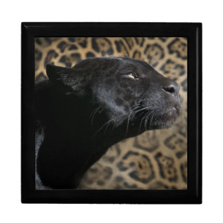 Gorgeous black panther leopard gift box
