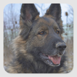Gorgeous Black-saddled German Shepherd Square Sticker