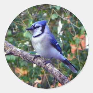 Gorgeous Blue Jay Round Sticker