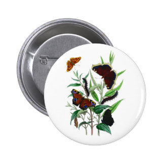 Gorgeous Butterflies 2 Inch Round Button