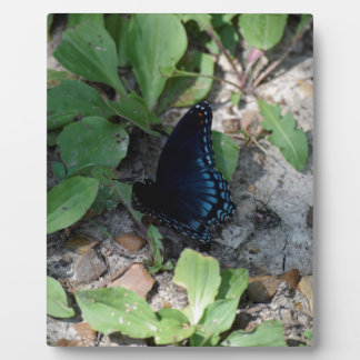 Gorgeous Butterfly Photograph Plaques