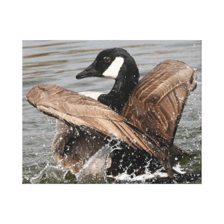 Gorgeous Canada Goose Strutting Its Stuff Canvas Print
