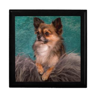 Gorgeous chihuahua portrait gift box