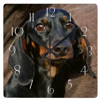 Gorgeous dachshund animal portrait square wall clock
