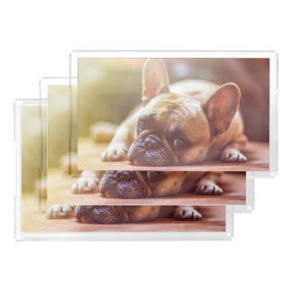 Gorgeous french bulldog lying down acrylic tray