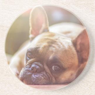 Gorgeous french bulldog lying down coaster