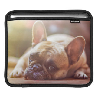 Gorgeous french bulldog lying down iPad sleeve