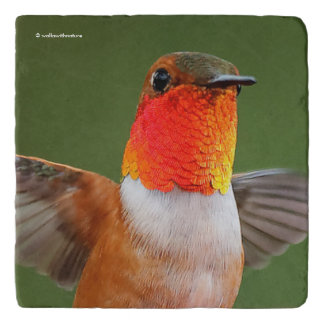 Gorgeous Gorget-Flashing Rufous Hummingbird Trivet