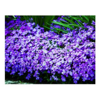 Gorgeous Graceful Flowers Postcard