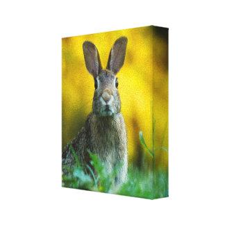 Gorgeous hare closeup canvas print
