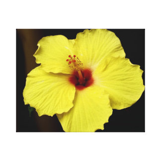 Gorgeous Hibiscus Chinese Rose Blooming Flower Canvas Print