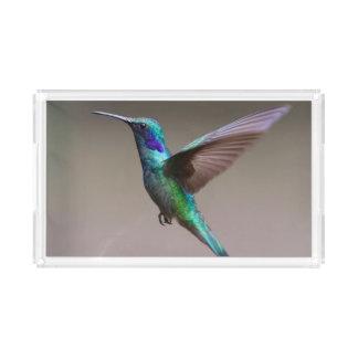 Gorgeous hummingbird in flight acrylic tray