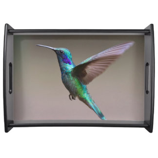 Gorgeous hummingbird in flight serving tray