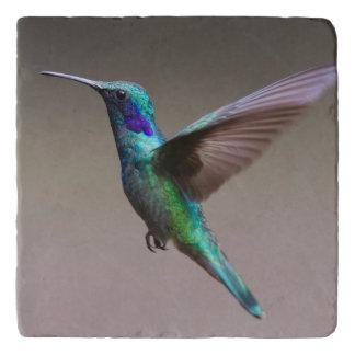 Gorgeous hummingbird in flight trivet