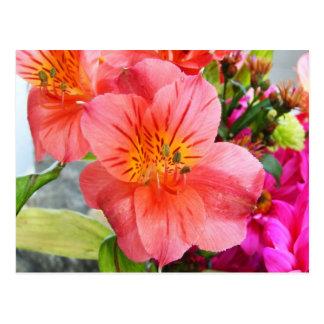 Gorgeous Lily Postcard