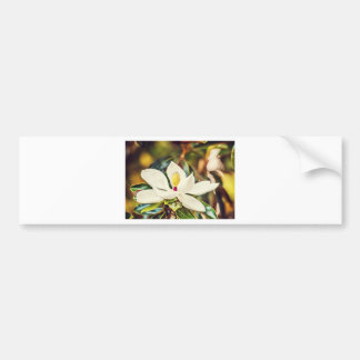 Gorgeous Mississippi Magnolia Bumper Sticker