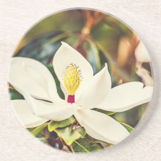 Gorgeous Mississippi Magnolia Coaster