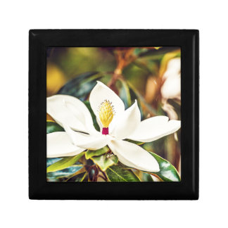 Gorgeous Mississippi Magnolia Gift Box