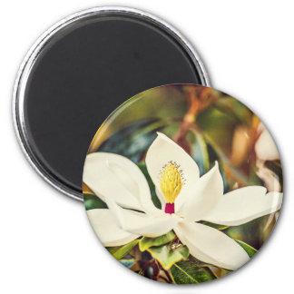 Gorgeous Mississippi Magnolia Magnet