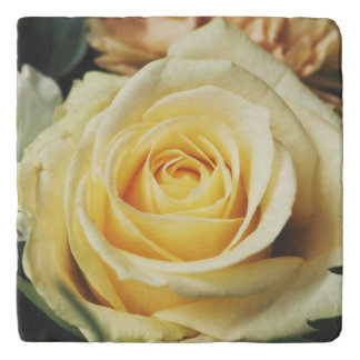 Gorgeous Pale Creamy Yellow Rose Trivet