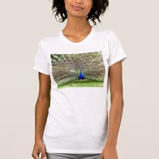 Gorgeous Peacock in Full Array T-Shirt
