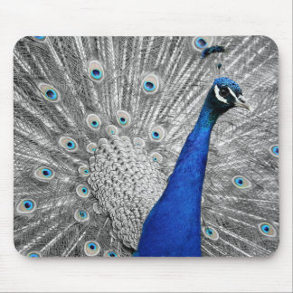 Gorgeous Peacock Mouse Pad