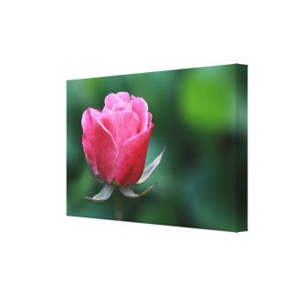 Gorgeous Pink / Red Rose Stretched Canvas Print