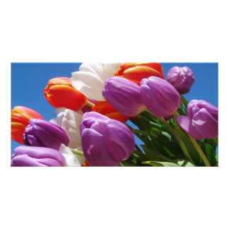 Gorgeous Purple Tulips Card Easter Mother s Day Photo Card