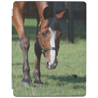 Gorgeous Quarter Horse iPad Cover