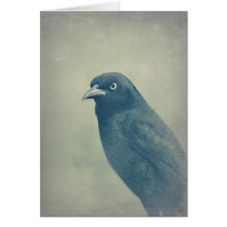Gorgeous Raven Photo Card