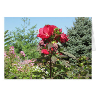 Gorgeous Red Flower in field of Flowers Card
