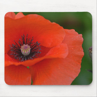Gorgeous Red Poppy Mouse Pad