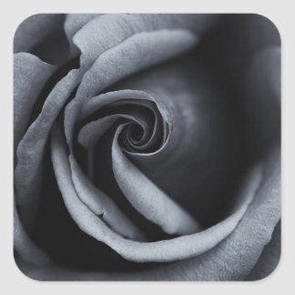Gorgeous Rose in Black & White Square Sticker