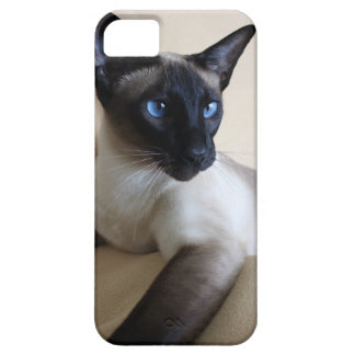 Gorgeous Siamese Cat Face Case For The iPhone 5