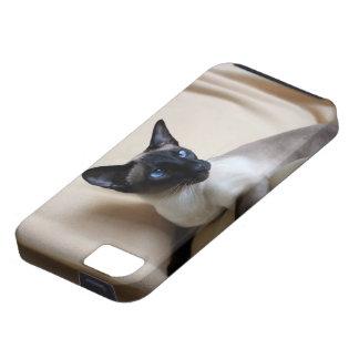 Gorgeous Siamese Cat Face iPhone 5 Cases