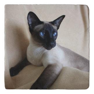 Gorgeous Siamese Cat Face Trivet