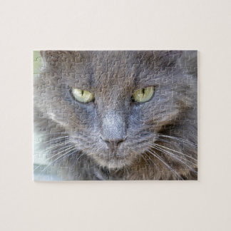 Gorgeous Staring Gray Cat with Green Eyes Jigsaw Puzzle