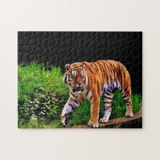 Gorgeous Tiger Jigsaw Puzzle