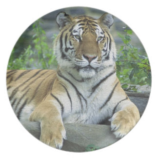 GORGEOUS TIGER PLATE